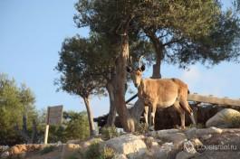 Здешние обитатели пустыни :)