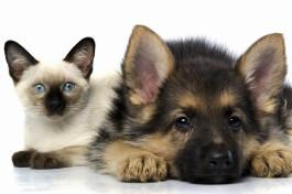 Правила ввоза домашних животных в Израиль.