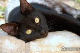 Иерусалимский Эйн Карем и кот, живущий в Горненском православном женском монастыре. Фото - Игорь Гершензон.