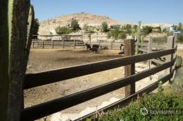 Ферма по выращиванию альпак, расположенная около израильского города Мицпе Рамон.