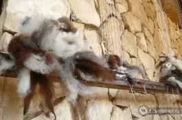 Шерсти альпак сохраняют естесственные цвета.
