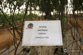 У каждой грядке в теплице есть табличка с названием сорта овоща, который там выращиваются.