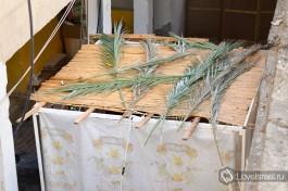 Сукка. Обязательно использование пальмовых ветвей.
