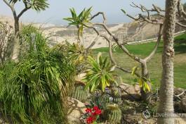 Кибуц Эйн-Геди на берегу Мертворо Моря поразит вас обилием... десятков экзотических видов кактусов. Нет, это не шутка.