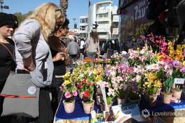 Цветочный базар в Тель-Авиве
