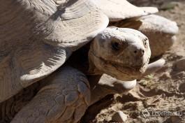 И черепахи :)
