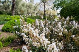 Парк Рамат ха-Надив, цветет и зимой и летом.