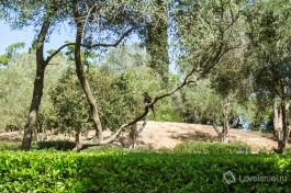Присмотритесь внимательно - на ветке дерева сидит разноцветный попугай! Не боится )