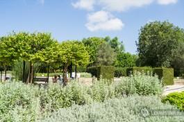 В парке Рамат ха-Надив, ганей-а-надив следят за внешним видом растений и иногда придают им необычную форму, например - квадратную.