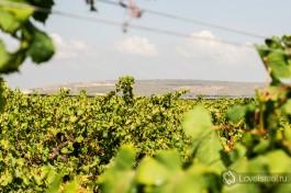 Зихрон-Яаков находится на своего рода границе между севером и югом Израиля.